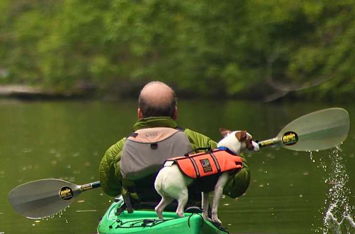 man kayaking the Dismal Swamp with his dog aboard