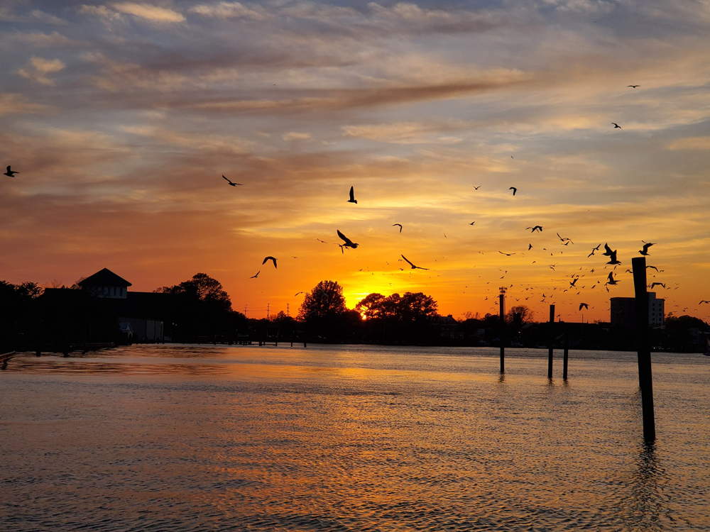 silhouettes of birds flying over the river at sunset